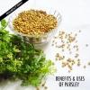 Avantages et les utilisations de persil et ses surprenantes graines