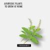 Plantes ayurvédiques à grandir à la maison
