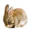 Mythes à propos de l'expérimentation animale