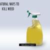 Moyens naturels pour tuer les mauvaises herbes