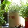 Cabinet de médecine de la nature: plantes médicinales