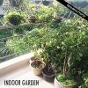 Conseils pour votre jardin intérieur