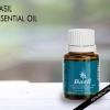 Haut les avantages et les utilisations de l'huile essentielle de basilic