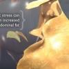 Vidéo: Comment le stress peut augmenter la graisse du ventre