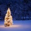 Quel est votre plus bel arbre de Noël?
