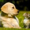 Qui est plus intelligent, les gens chien ou un chat gens?