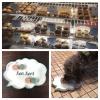 Vous devez visiter la boulangerie chien!