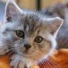 Votre chat peut être Hurting votre vue (Sérieusement)